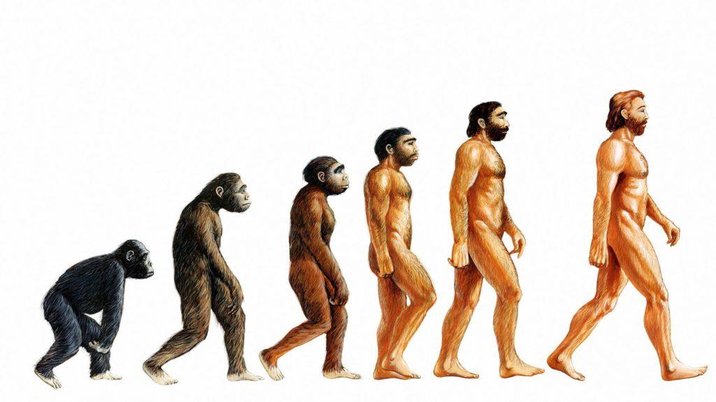 Θεωρία της εξέλιξης των ειδών του Δαρβίνου