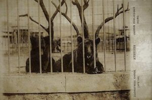 Ξηροτάγαρο Ζωολογικός κήπος 6
